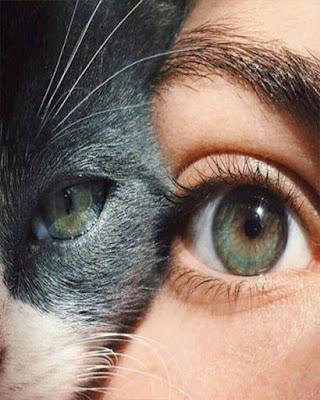 foto tumblr de ojos con gato