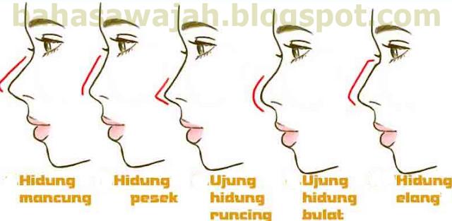 Rahasia Bentuk Hidung dan Watak Pemiliknya - Bahasa Wajah