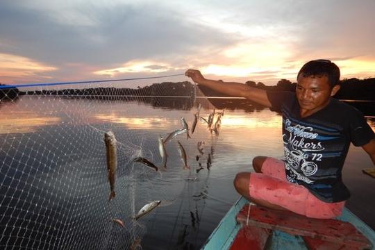 Proximidade de centros urbanos afeta comunidades de peixes de rios amazônicos