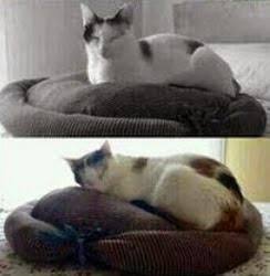 http://www.manualidadesblog.com/tutorial-para-hacer-una-cama-para-tus-mascotas/