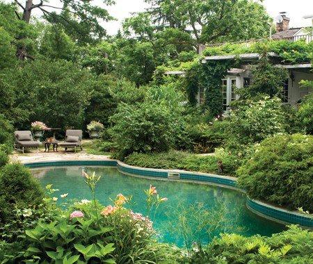 Piscina rodeada de plantas piscinas y albercas fotos de for Plantas para piscinas