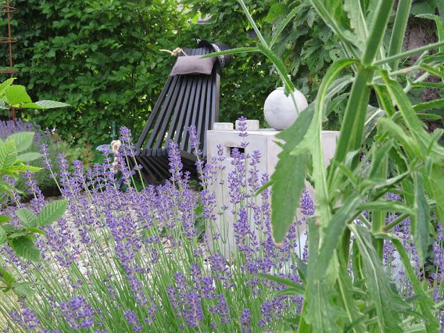 Noen år etter samplantingen av Lavendel og Kjempeverbena i Furulunden