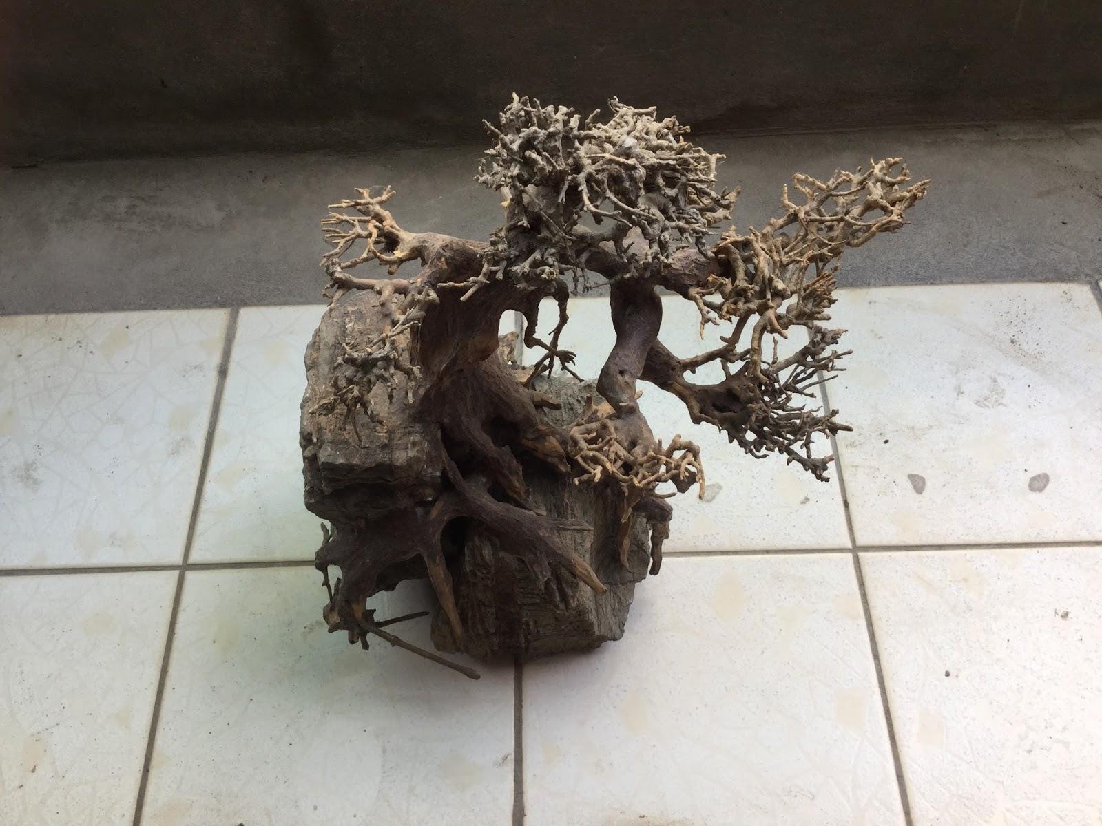 Lũa bám đá dáng tự nhiên
