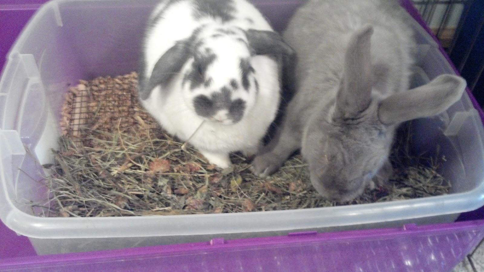 The Rabbit Advocate Rabbit Housing Series The Litterbox