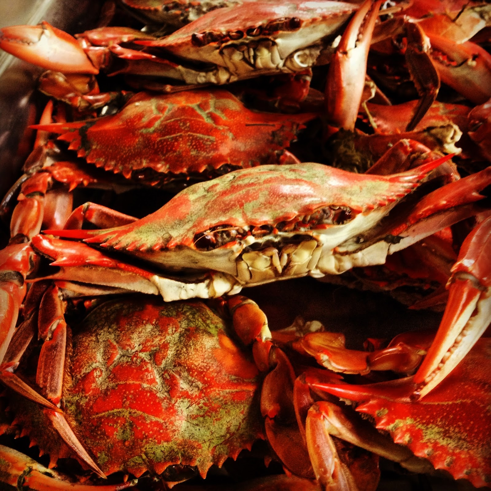 Crab Island  Scratch