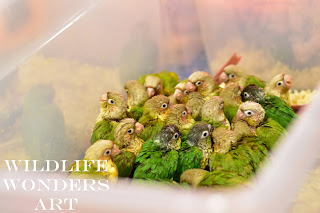 baby parrots as pets