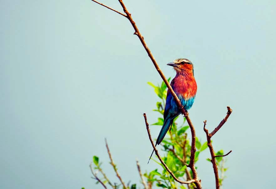 beautiful-colorful-bird-background