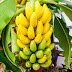 Exclusive: See 8 Good Reasons Why You Should Be Eating More Bananas