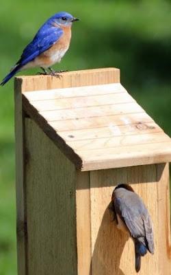 Bluebird House Plans
