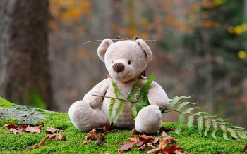 Wallpaper: Forest. Animal Toys. Teddy Bear