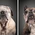 Fotógrafo registra cães idosos em um projeto emocionante