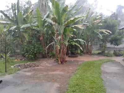 manfaat hujan bagi manusia