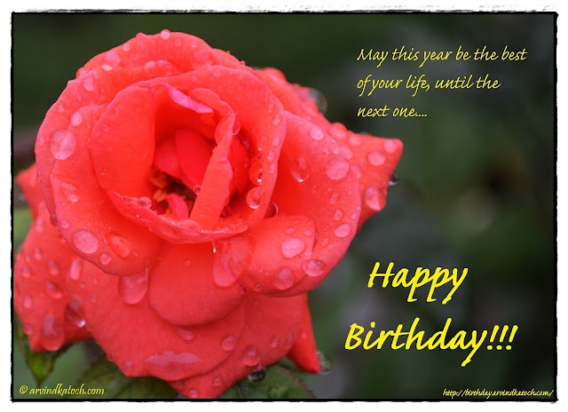 Beautiful, Wet, Red Rose, Birthday Card, year, best, life, Happy Birthday Card