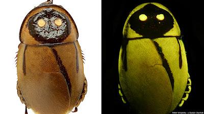 شاهد : عشرة أنواع جديدة من الكائنات الحية 130524120002_glow-in