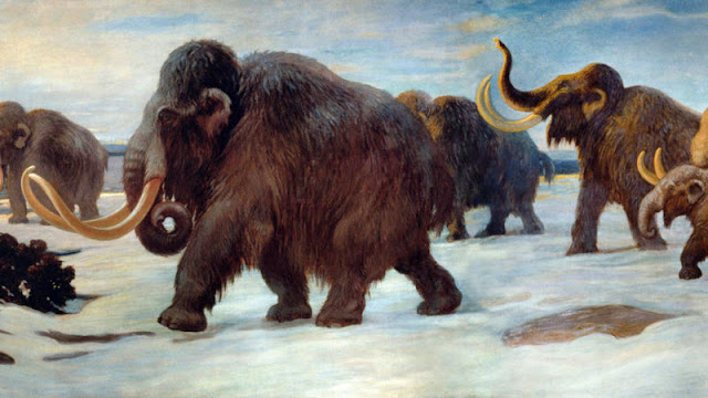 Genetic study suggests more male mammoths fell into 'natural death traps' than females
