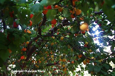 tastes and aromas of Kefalonia
