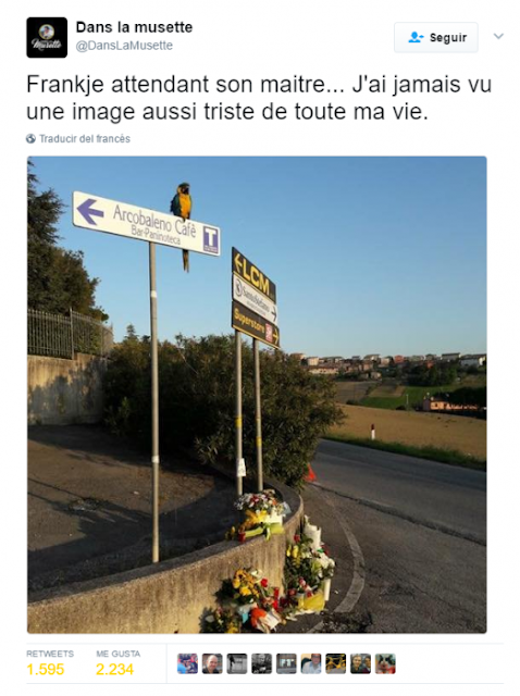 Mascota de ciclista fallecido, lo espera a que regrese