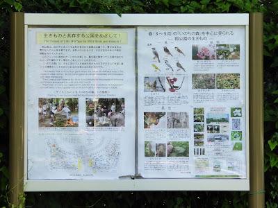 春(3~5月)の『いのちの森』を中心に見られるー靭公園の生きものー