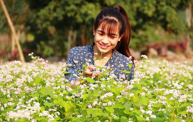 Ninh Binh brightened with buckwheat flowers blooming 3