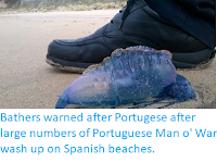 https://sciencythoughts.blogspot.com/2018/03/bathers-warned-after-portugese-after.html