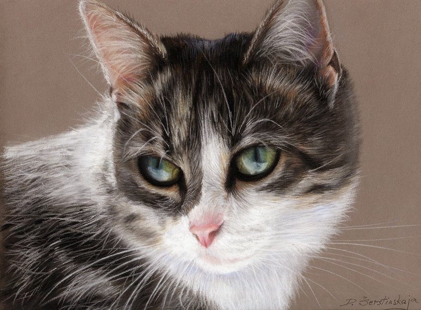 13-Tabby-Cat-Danguole-Serstinskaja-Paintings-of-Cats-that-look-like-Photographs