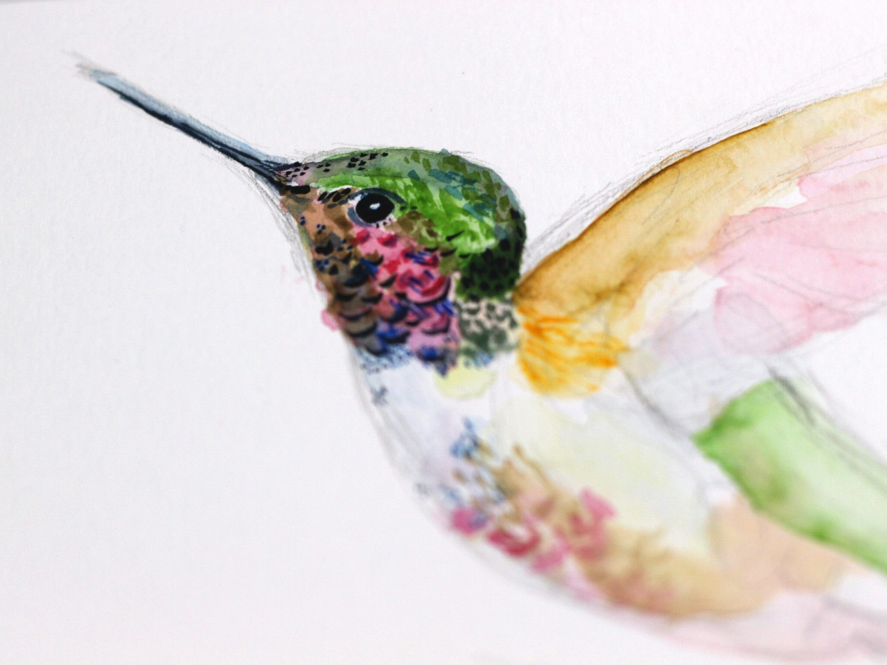 Watercolour Painting Hummingbird Catherine Braithwaite Blog