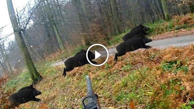 Court métrage de chasse au gros gibiers 2017