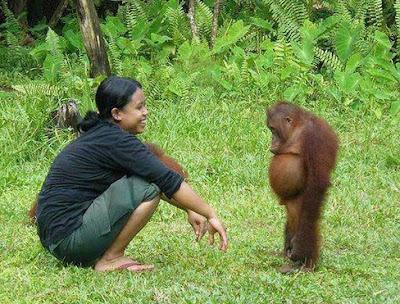 photo lucu orang dan hutan