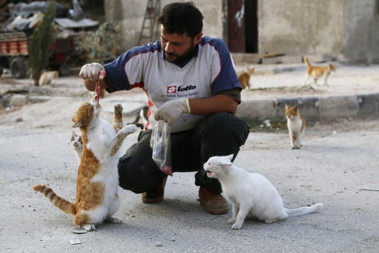 Meet The Activist Who Stayed In Syria To Feed Hundreds Of Abandoned Cats