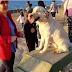 Το πρώτο πάρκο για σκύλους στην Κρήτη...