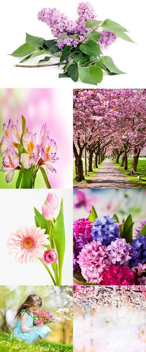 20 adet bahar resimleri