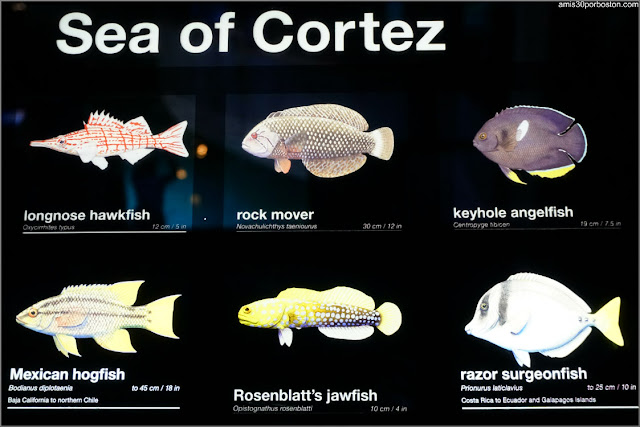 Información del Acuario de Boston sobre las Especies que Exhiben