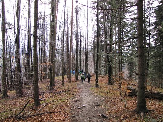 Miejsce, gdzie leśne zbocze z naszą ścieżką załamuje się w dół