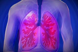 Sistem pernapasan terdiri dari organ dan jaringan yang membantu seseorang bernapas. Bagian sistem pernafasan adalah saluran udara, paru-paru, pembuluh darah dan otot-otot.