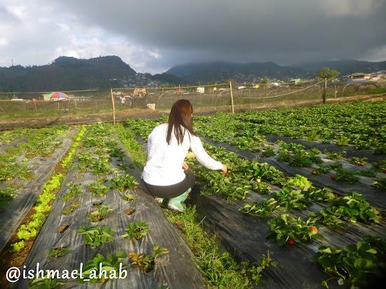 Our lady farmer guide at Strawberry Farm in La Trinidad, Benguet