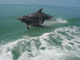Cría de delfín con su madre en el mar