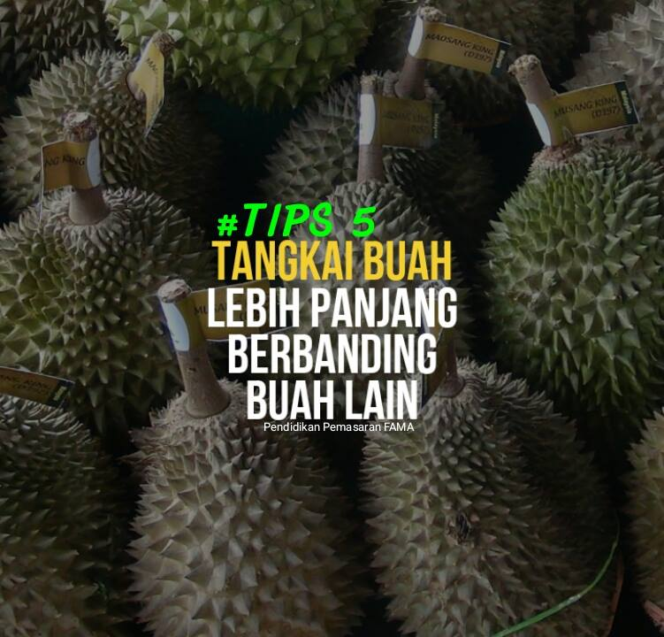 Tips 5 Mengenal Durian Musang King