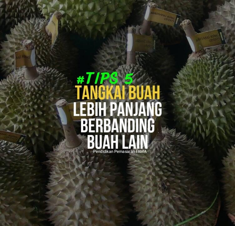 Tips 5 Mengenal Durian Musang King