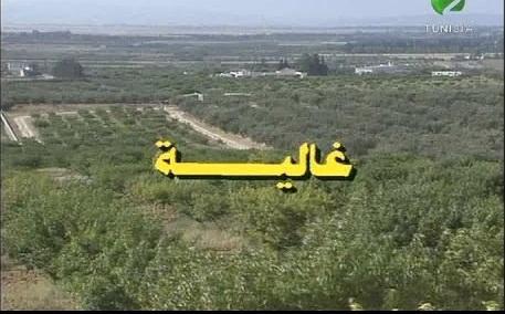 المخرج التونسي المنصف الكاتب