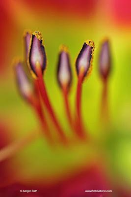 http://juergenroth.photoshelter.com/gallery-image/Abstract-Flower-Photography/G0000xwJgMChQG_s/I0000U01PH7jICtQ