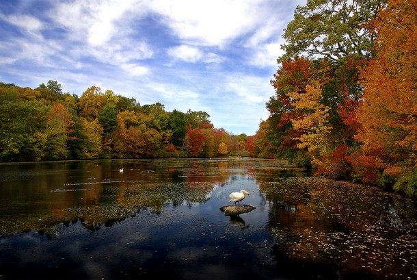 Connecticut Young's Pond, Branford