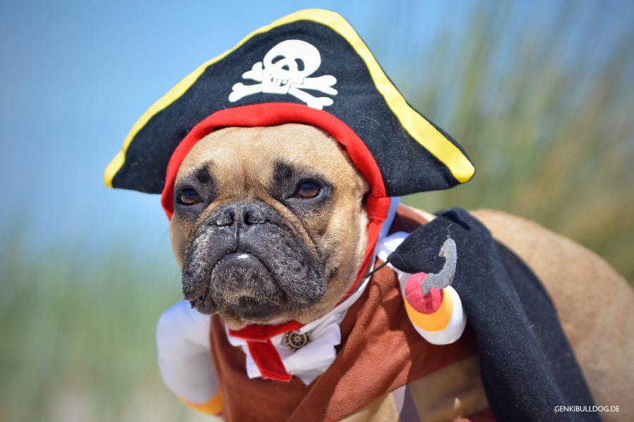 Texel - Hundeblog Französische Bulldogge Piratenkostüm