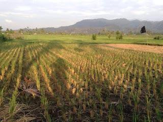 tanah dijual kota Tanjung KLU 1,45 hektar