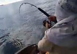 Triple Strike Ikan Merah Dan Combo Kaci
