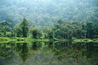 Orkid merupakan bunga kebangsaan negara singapura. Macfull Blog: Wallpaper hutan