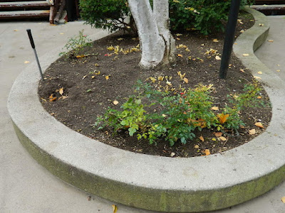 Garden District Toronto Fall Cleanup After by Paul Jung Gardening Services--a Toronto Organic Gardening Company