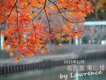 2015年12月京都奈良名古屋紅葉速報