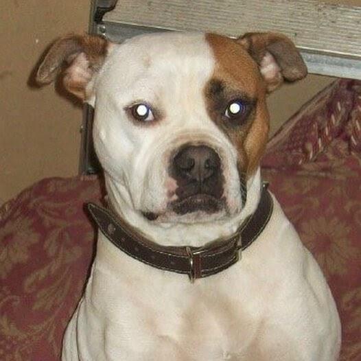 04-Photo-of-the-dog-Sandrine-R-www-designstack-co
