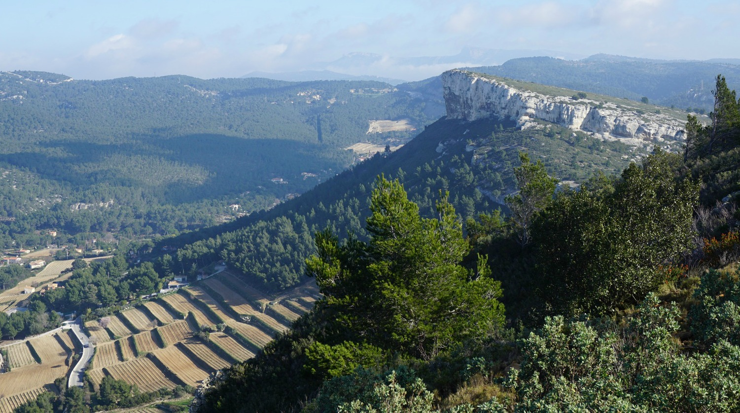 Cassis vineyards below Couronne de Charlemagne