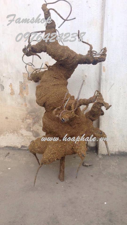 Goc bonsai mai dao tai Ho Xuan Huong